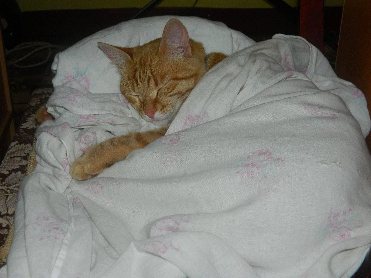 Почему кошка писает на кровать: причины и методы отучения