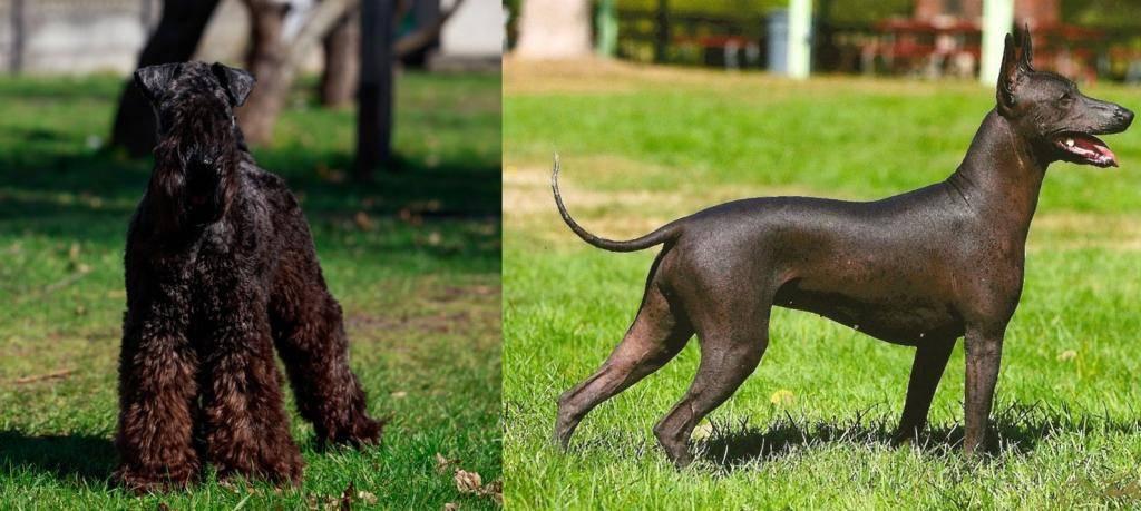 Гипоаллергенные породы собак для аллергиков