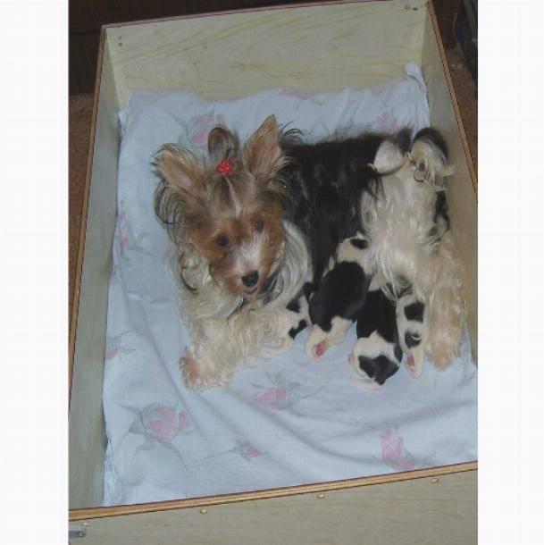 Подготовка к родам у собаки - myyorks