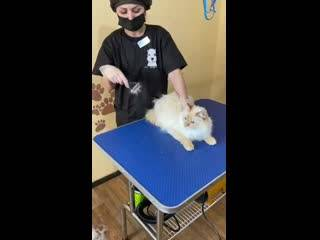 Экспресс-линька собак и кошек   москва зоосалон - текстильщики, кузьминки, люблино