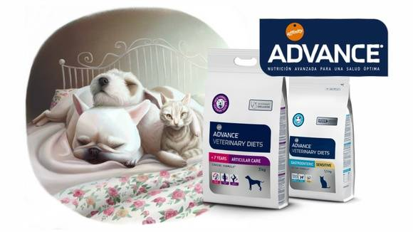 Корм для кошек advance: отзывы, разбор состава, цена - петобзор