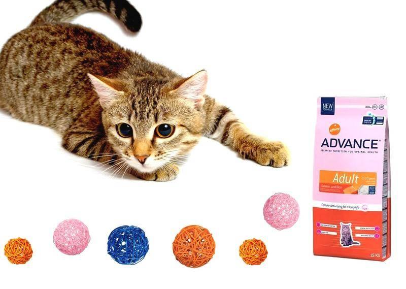 Корм нау (now) для кошек