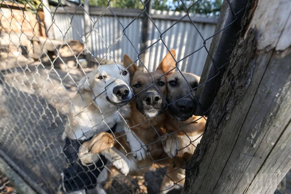 Защитники животных собрались для получения тендера на отлавливание бездомных собак
