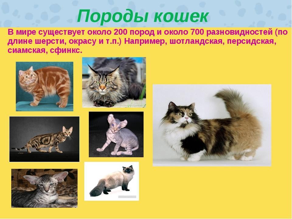 23 самых интересных пород котов и кошек: описание и разновидности
