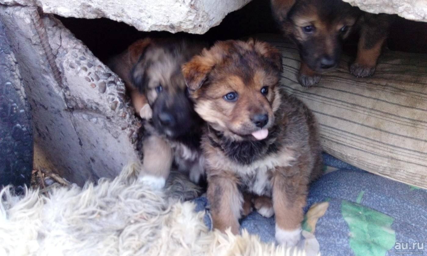Клички для собак мальчиков