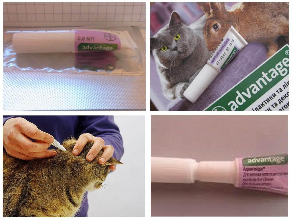 Применение препарата аdvantage (адвантейдж) для кошек