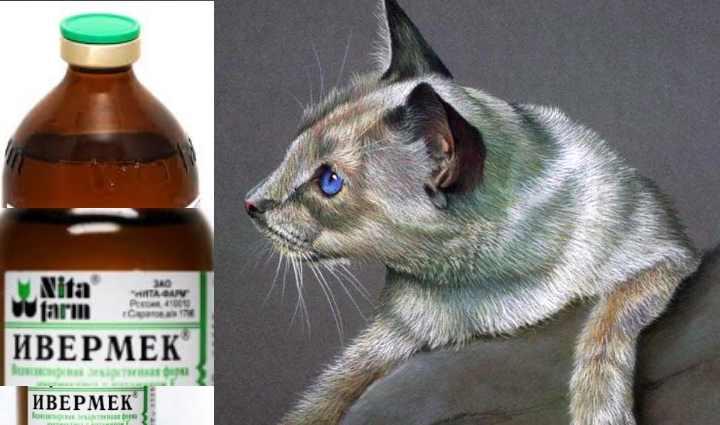 Ивермек для кошек: инструкция по применению препарата на основе ивермектина в ветеринарии, отзывы