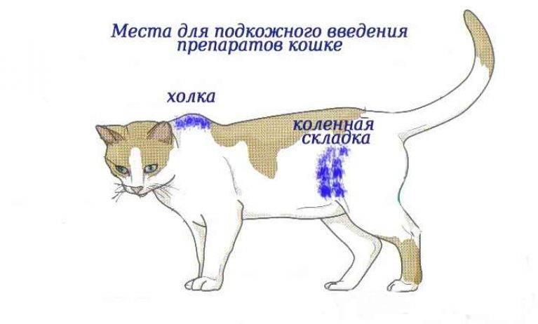 Как сделать укол кошке: внутримышечно, в холку, в бедро, в домашних условиях