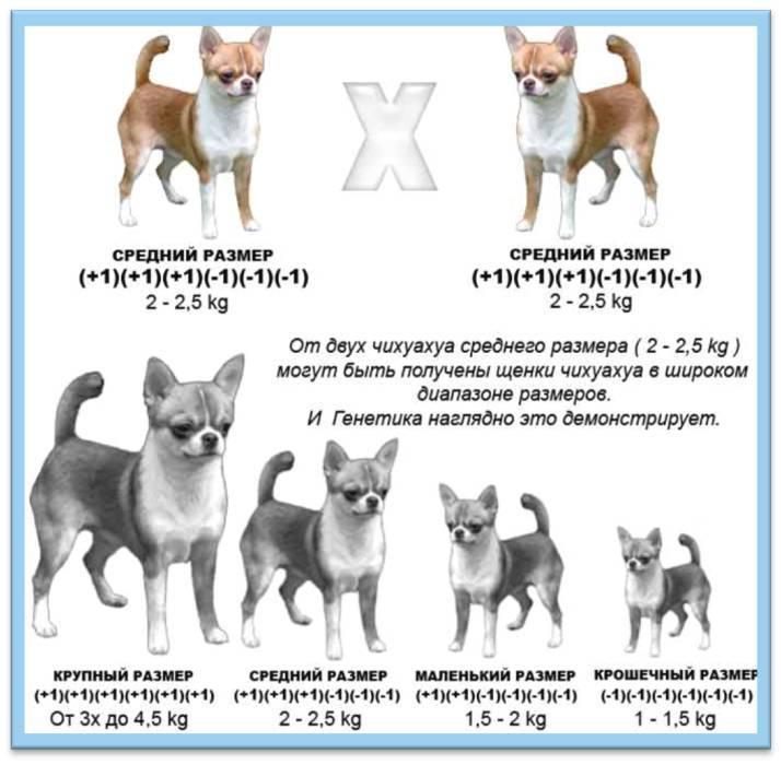 До какого возраста растут коты и кошки | zoosecrets