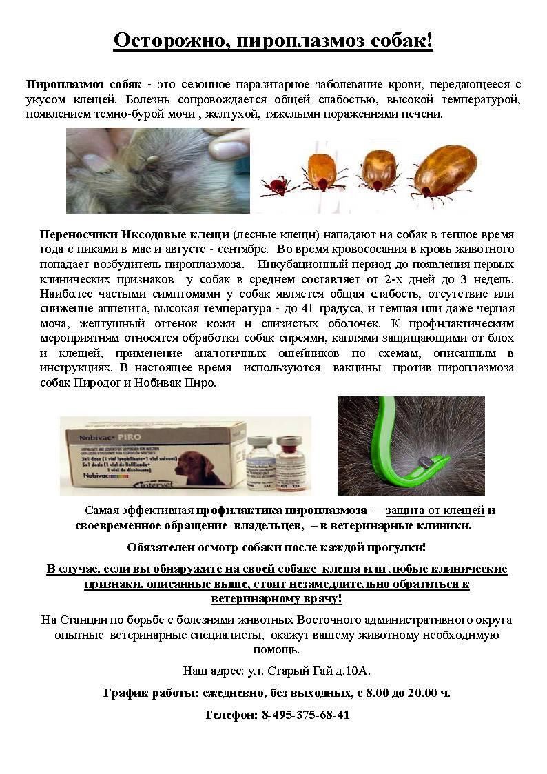Пироплазмоз у кошек: симптомы и лечение | болеют ли, причины
