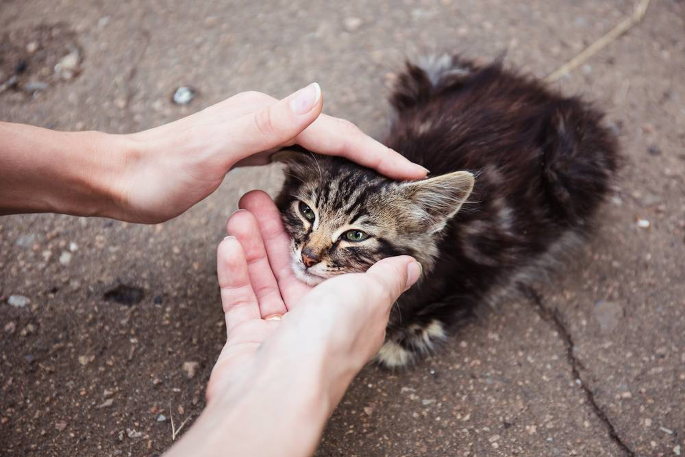 Как правильно брать и держать кота или кошку на руках, чтобы не причинить неудобств животному?