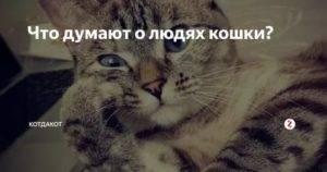 Как кошки воспринимают своих хозяев