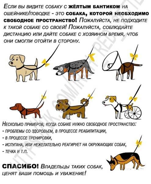 Вязка или случка собак: особенности процедуры, видео и описание, советы
