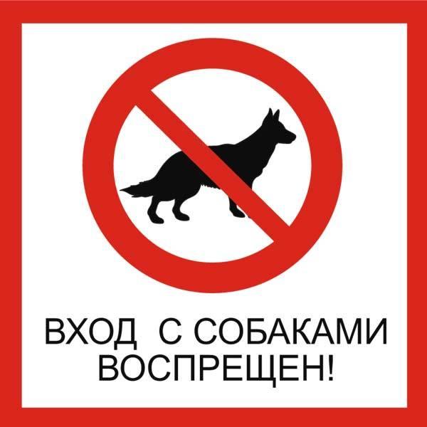 С собакой в магазин — допустимо ли по закону такое действие