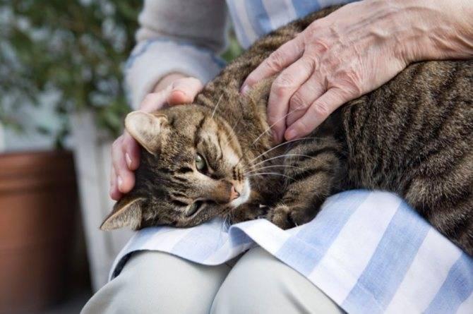 Почему кошки мурлыкают | зачем и как, когда их гладишь