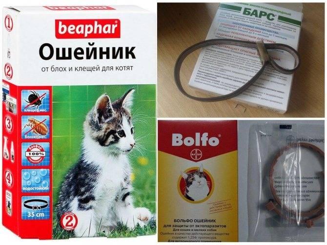 Шампунь от блох для кошки и котенка: как мыть, какой лучше, отзывы, цены