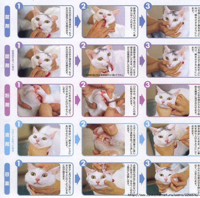 Как дать таблетку кошке:  4 способа с фото и видео