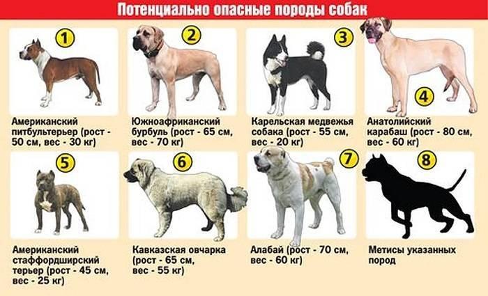 Список потенциально опасных пород собак в россии в 2019 году