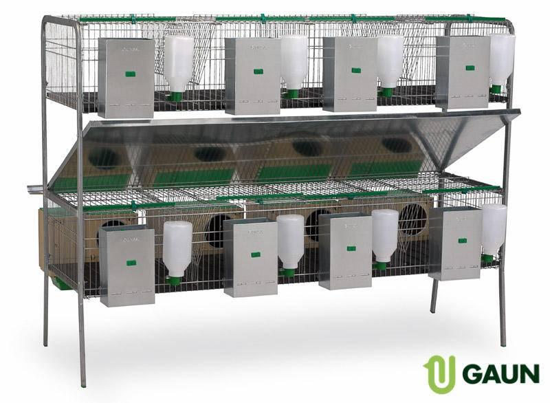 Бизнес на кроликах (апрель 2021) — vipidei.com