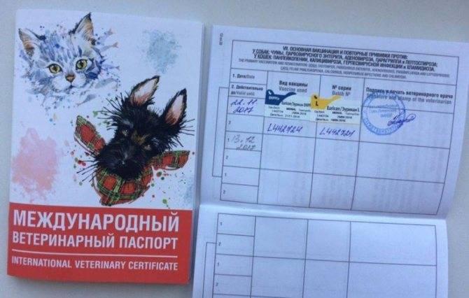 Окрас собаки в паспорте как указать | что говорят насекомые