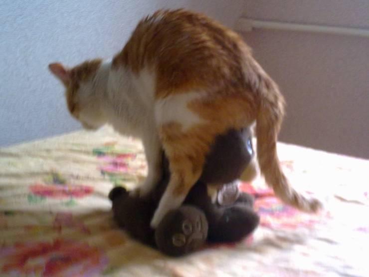 Воспаление параанальных желез у кошки - симптомы и лечение