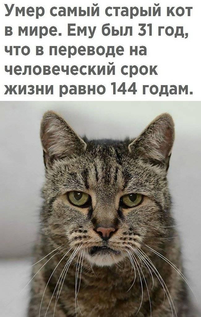Старение кошки: признаки, чем кормить и как ухаживать | hill's pet