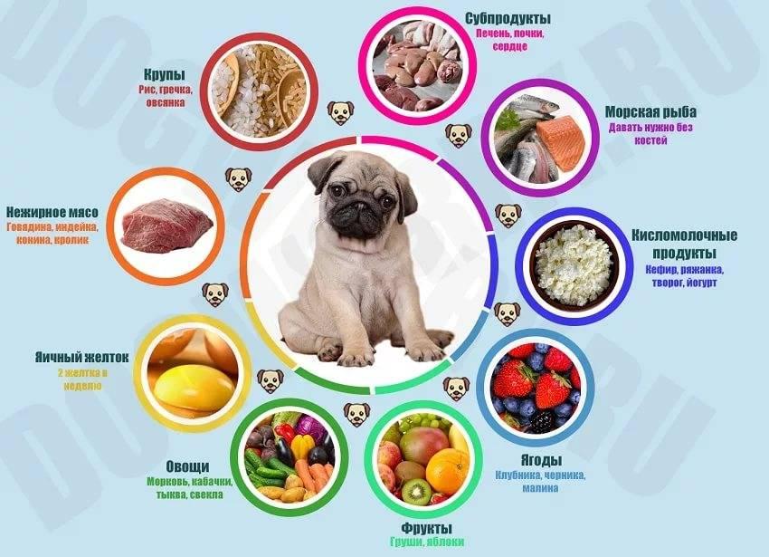 Как правильно кормить собаку натуральной пищей, до и после прогулки, сухим кормом