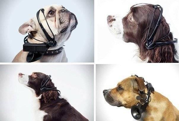 Заблуждения «переводчика с собачьего»