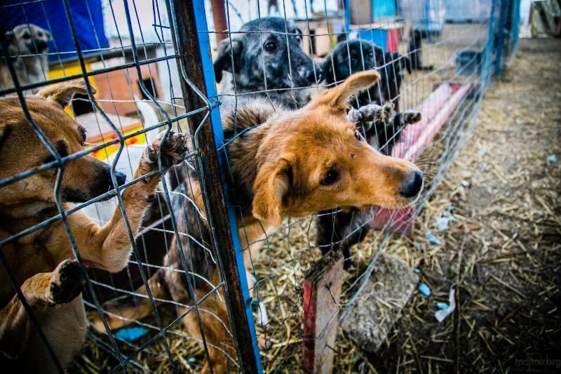 5 лучших приютов для собак в москве - рейтинг 2020