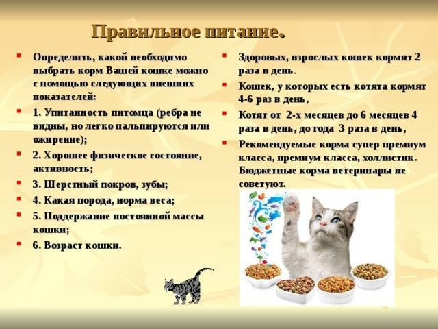 Как ухаживать за котёнком в домашних условиях: необходимые предметы, питание и важные мероприятия