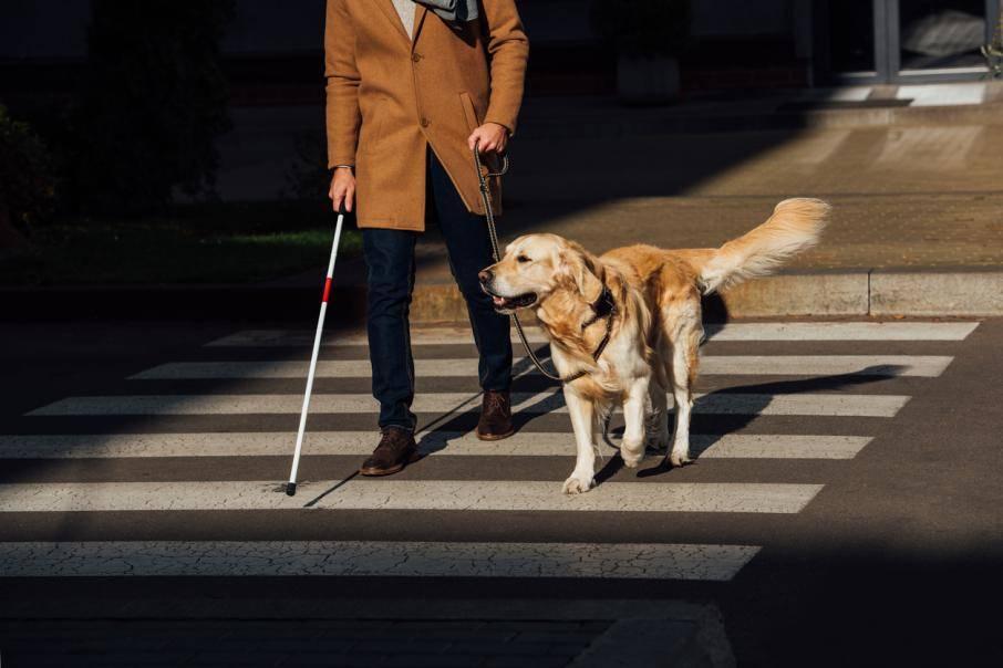 Собака-поводырь — обзор пород с фото и названиями