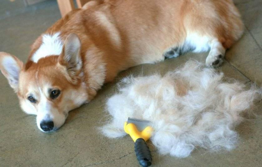 Фурминатор для собак: как избежать неприятностей линьки