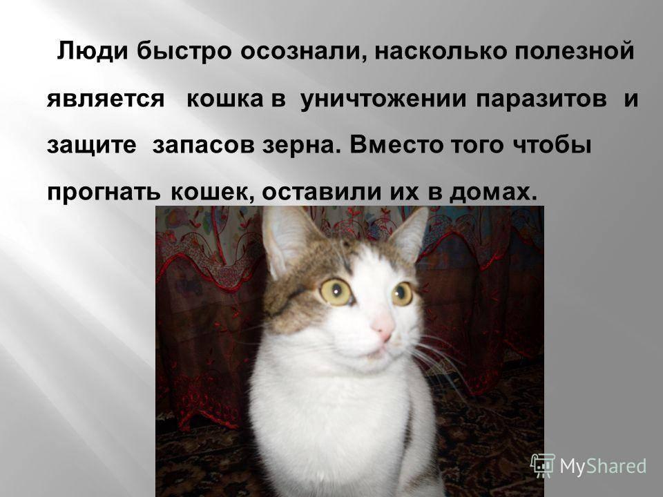 На сколько дней можно оставить кошку дома одну:советы для опытных кошатников