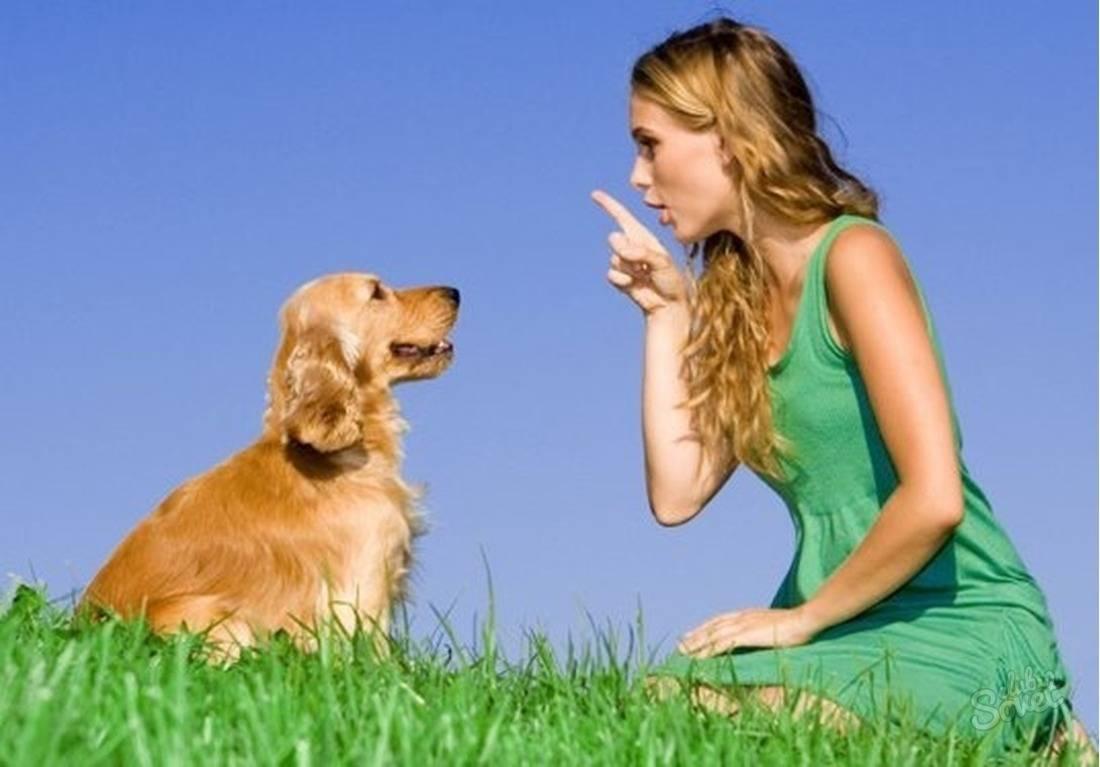 Как отучить собаку прыгать на людей и хозяина: от радости, при встрече, на улице