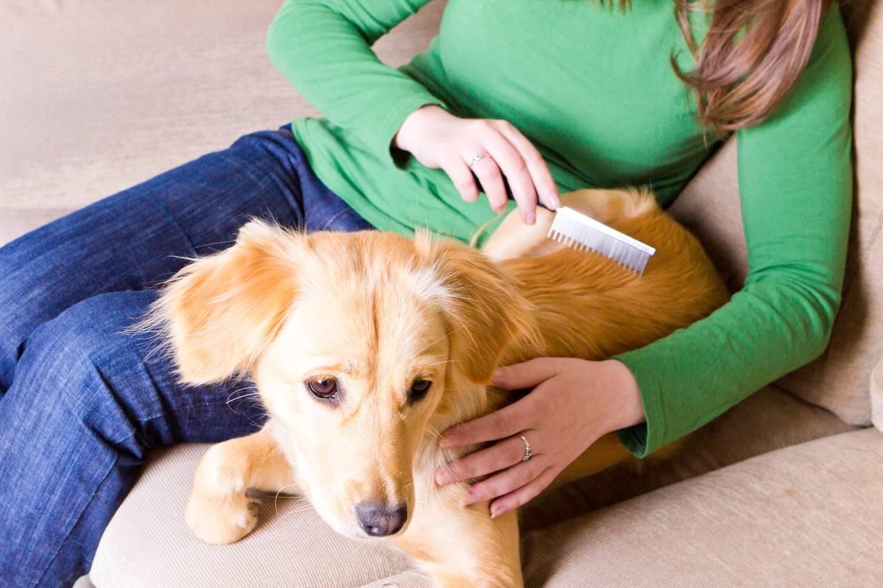 Собаки, рекомендации по уходу за шерстью собак