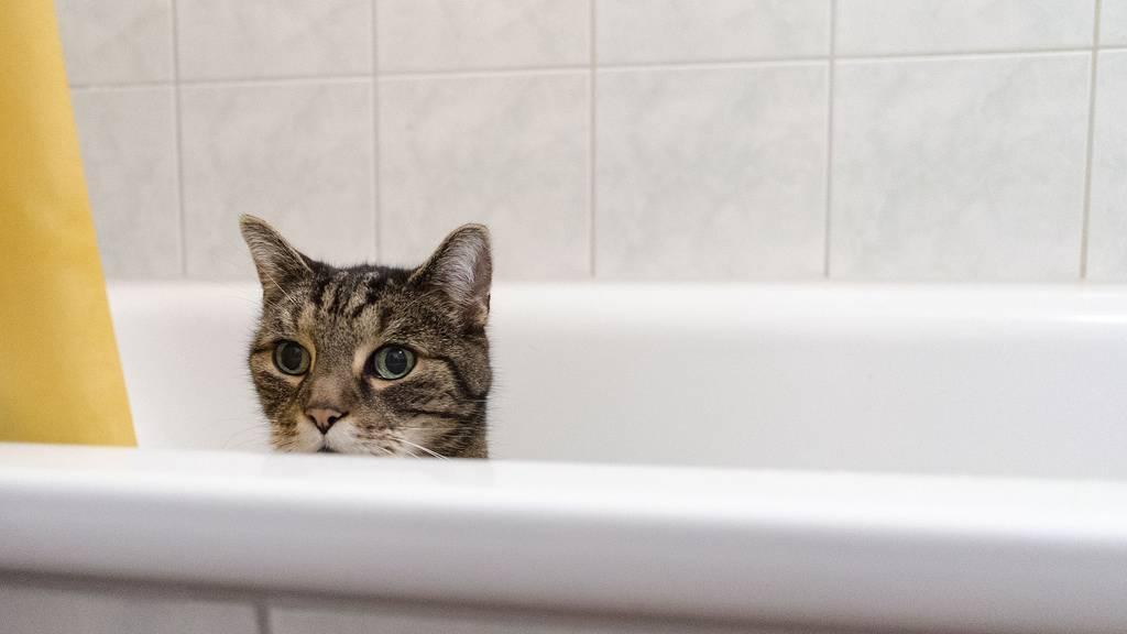 Почему же кошки боятся воды и основные рекомендации для купания