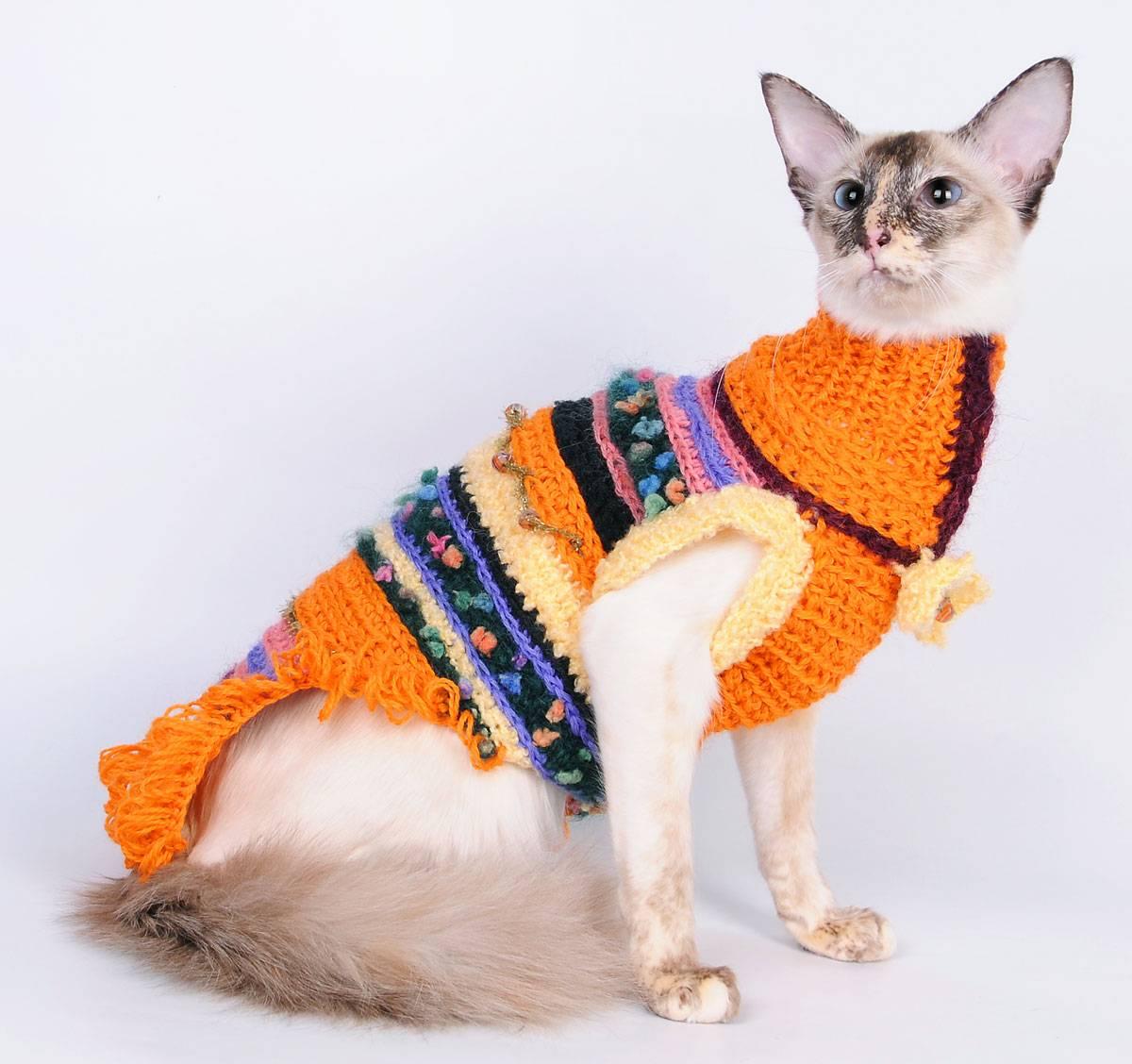 Как пошить одежду для кошки в домашних условиях?