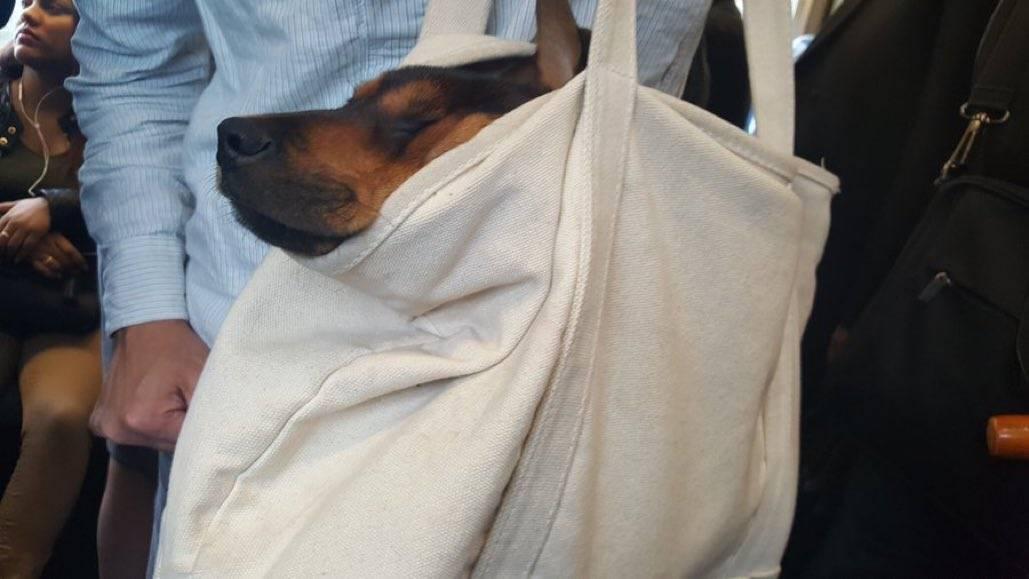 Можно ли ездить с собакой в пассажирском автобусе?