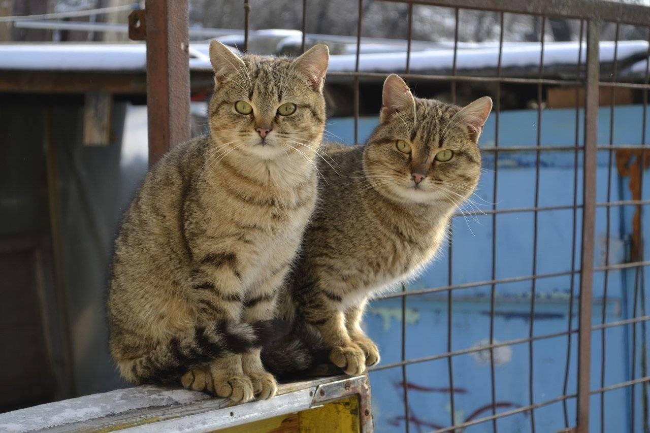 Простые беспородные кошки: почему мы их так любим