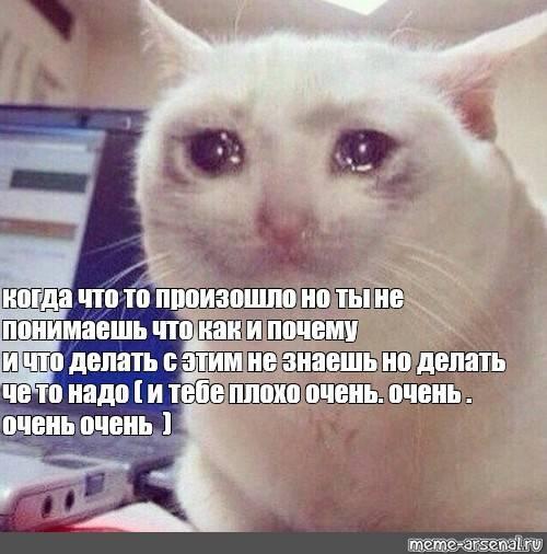 Почему кошки плачут?