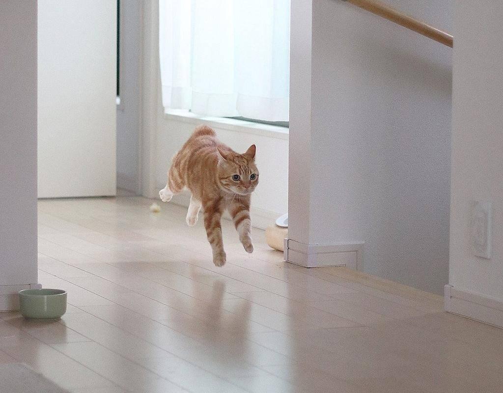 Что делают кошки, когда хозяев нет дома