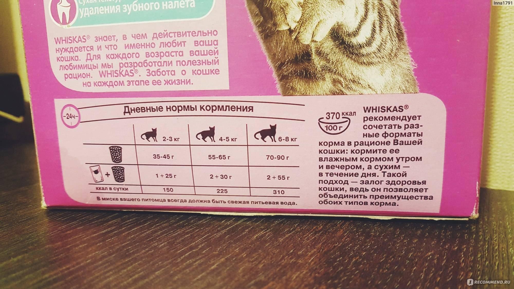 Можно ли кормить кошку собачьим кормом — влажным или сухим и в чем отличие
