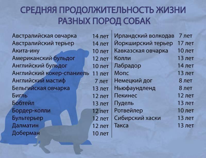 Сколько живет лабрадор в квартире и в частном доме, уход и содержание собаки