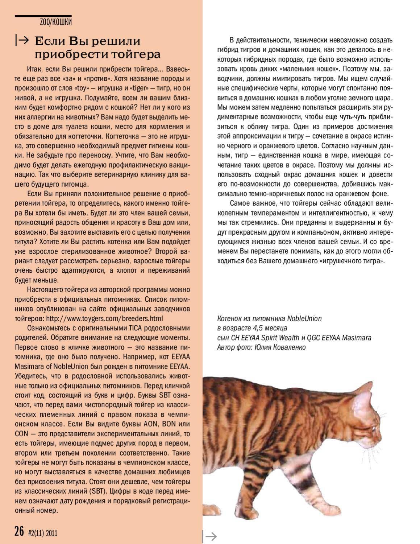 Кошка сноу шу: описание внешности и характера, уход за питомцем и его содержание, выбор котёнка, отзывы владельцев, фото кота сноуша