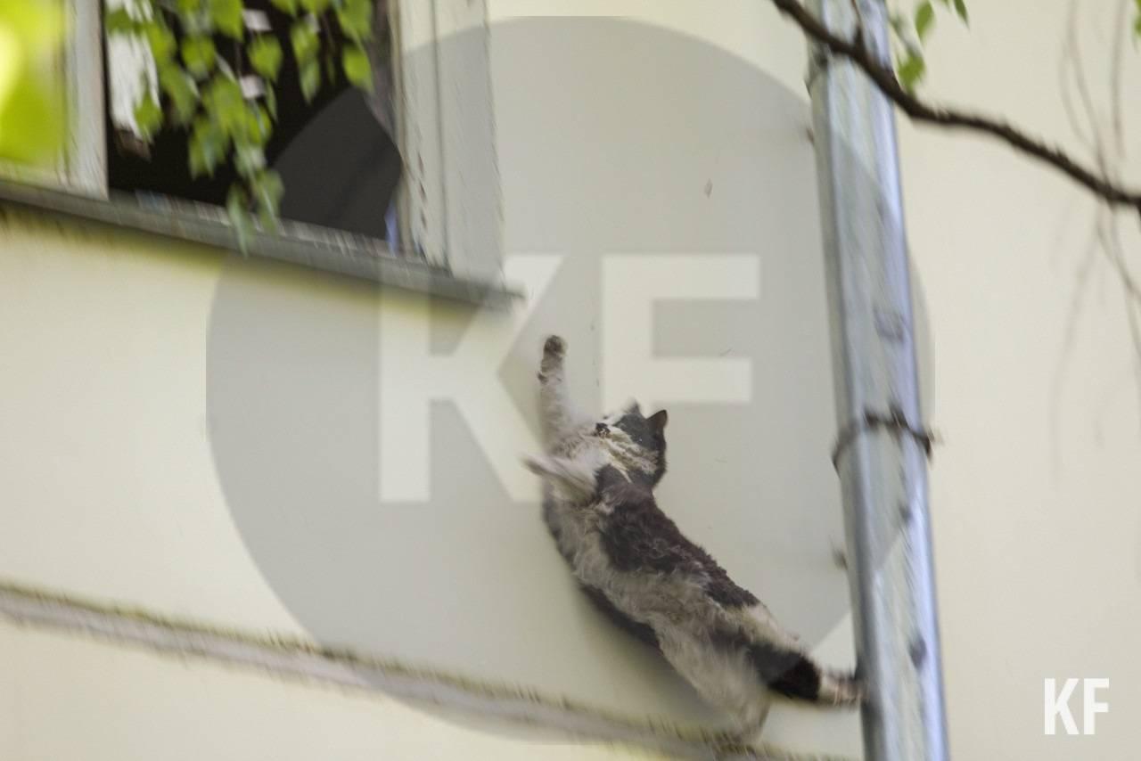 Как найти пропавшего кота? лучшие способы