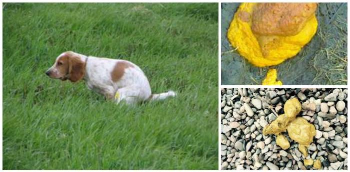 У собаки стул с кровью - причины и лечение | ветеринарная клиники берлога