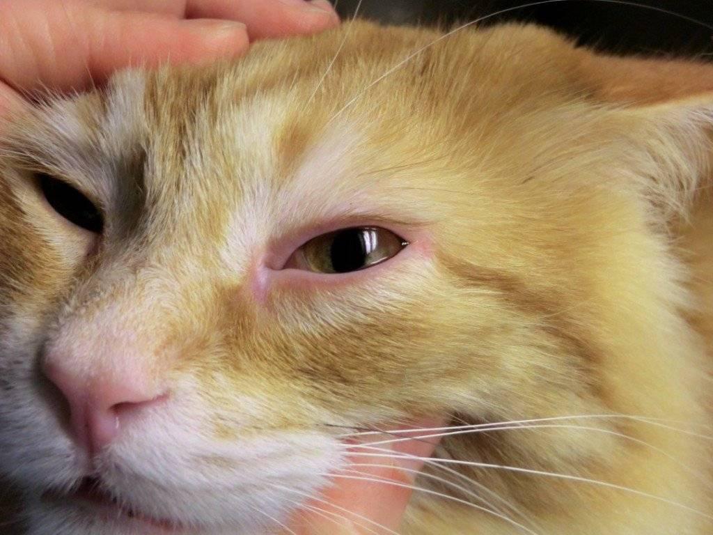 У кошки слезится один глаз: что делать