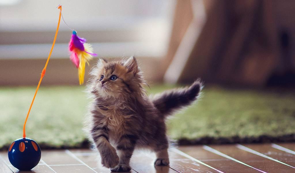 Психология и поведение кошек | kotodom.ru