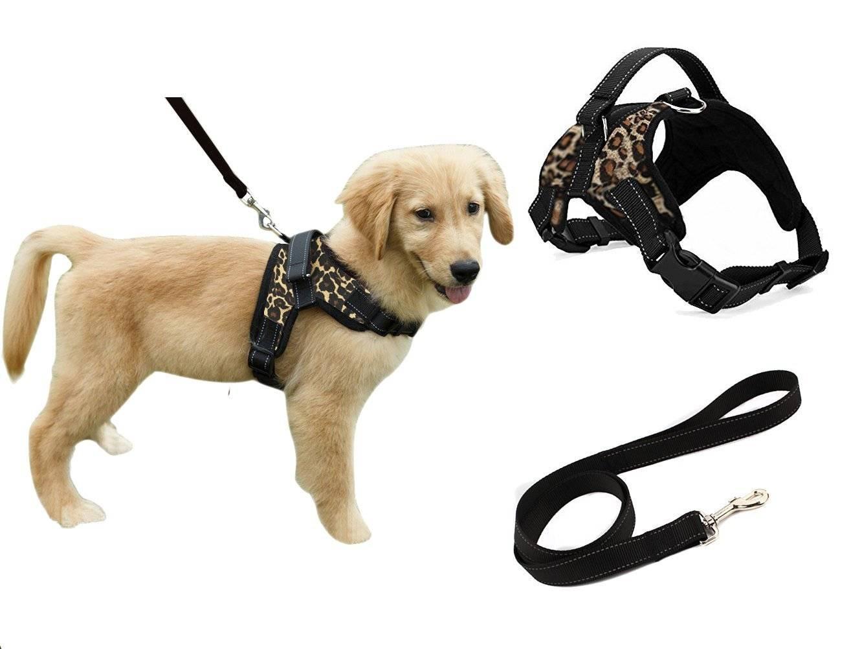 Как надеть шлейку на собаку | dog-care - журнал про собак
