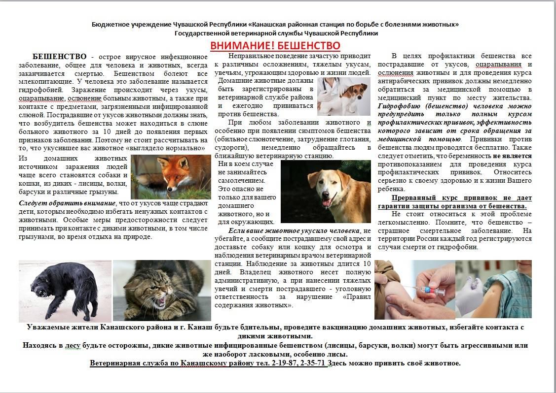 Болезни межпозвонковых дисков у собак, симптомы и причины